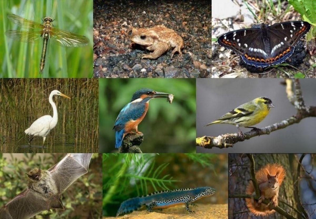 La faune habitante des lieux