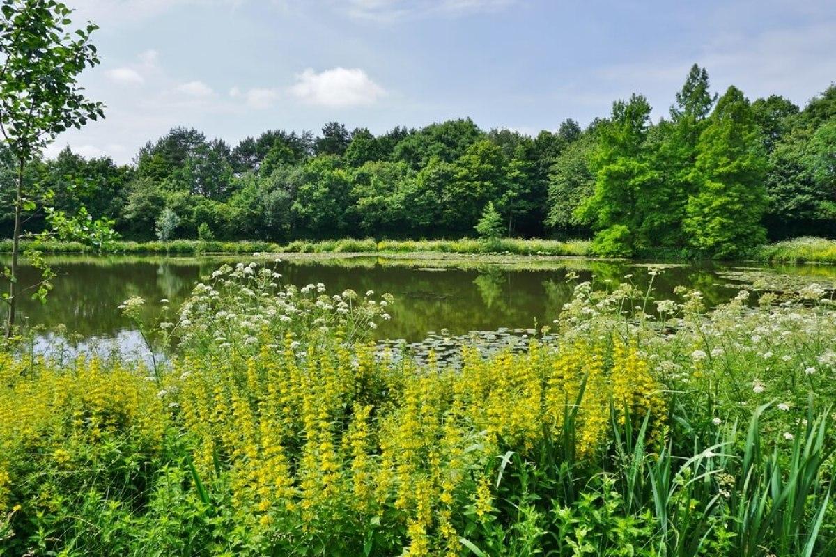 Le parc des Gayeulles à Rennes, un écosystème rare en ville