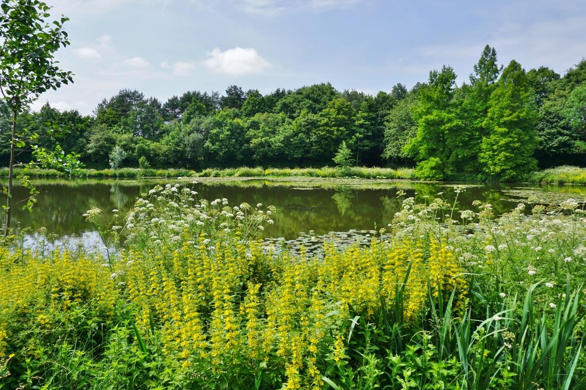 Îlots de fraicheur à Rennes – Le parc des Gayeulles